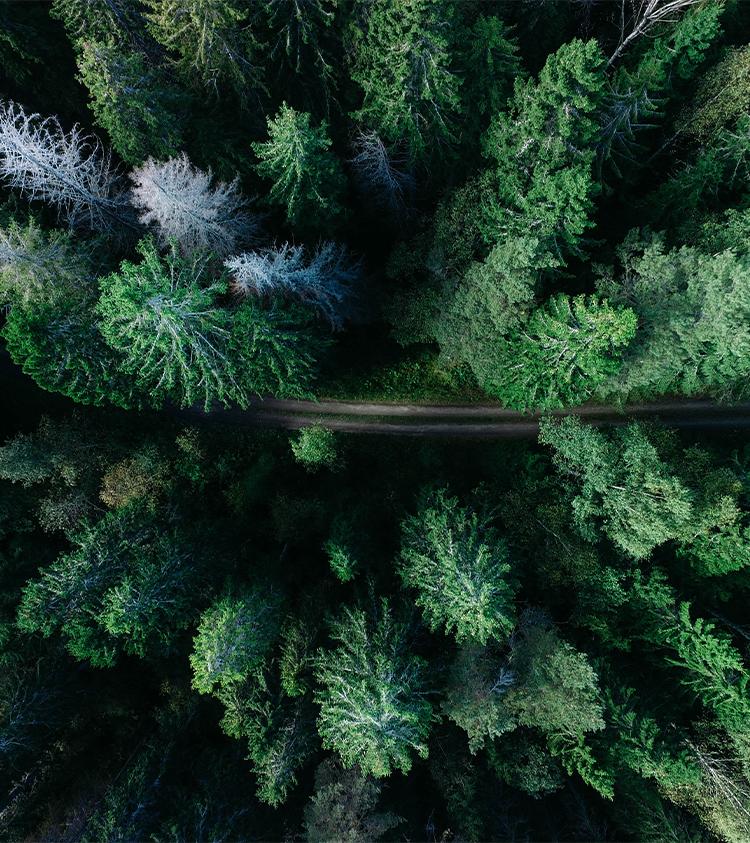 Forêt vue du ciel avec route